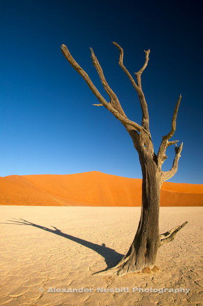 "Namibia, 2004 - A dead tree and its shadow decorate the barren dried pan of the ""Dead Vlei"" near Sossusvlei."