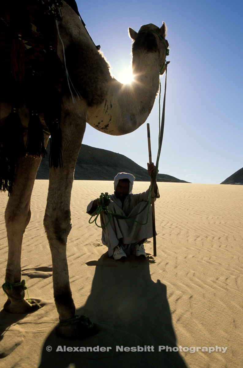 EGYPT -Bedouin guide sits under camel, on sand with reins in hand, camel trek, Egyptian Western desert.
