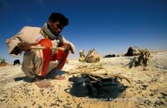 Local bedoiun boy Ali lights a fire for tea, Camel trek, Egyptian Western Desert.