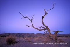 Namibia, Puros - A Lone dead tree at dusk as twilight falls over the rough country of Kaokoland, northwestern Namibia near Puros