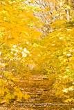Nesbitt-White-mountians-hike-IMG_1372