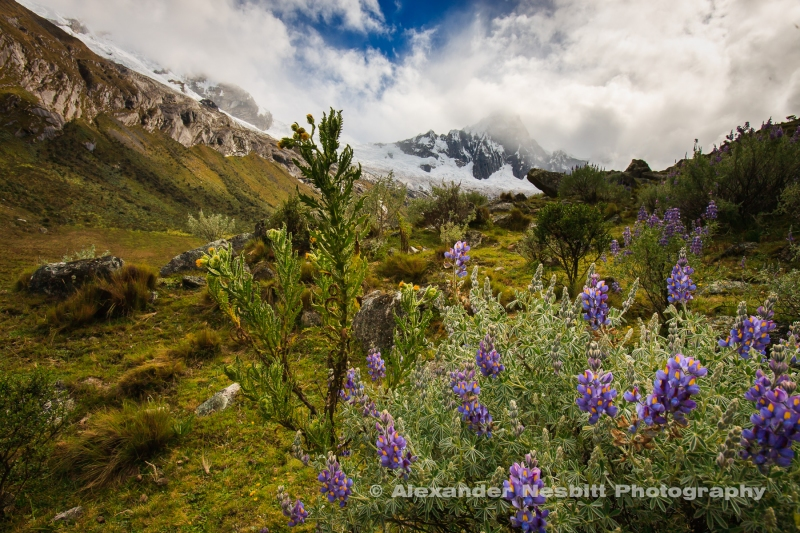 The Santa Cruz valley trek winds up the vallery toward Taulliraju Peak before crossing over the Andes at pass just on the shoulder of the mountain right at the snow line, Andes, Peru