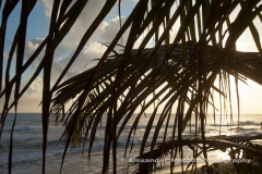 Beach sunrise through the palm trees in Cabarette, Dominican Republic
