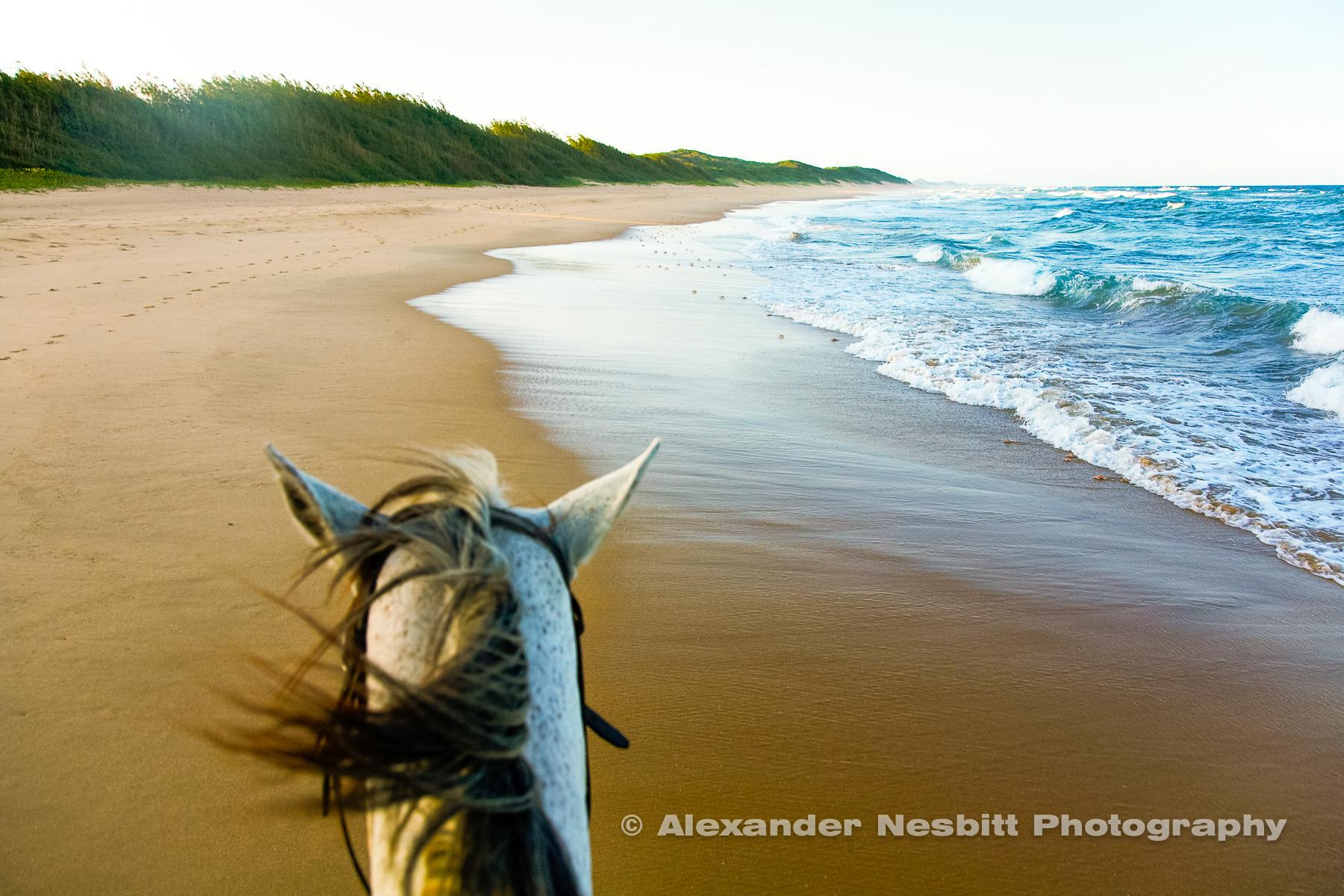 Riding the beach on horseback