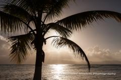 Nesbitt-Guadeloupe-5E6A0822